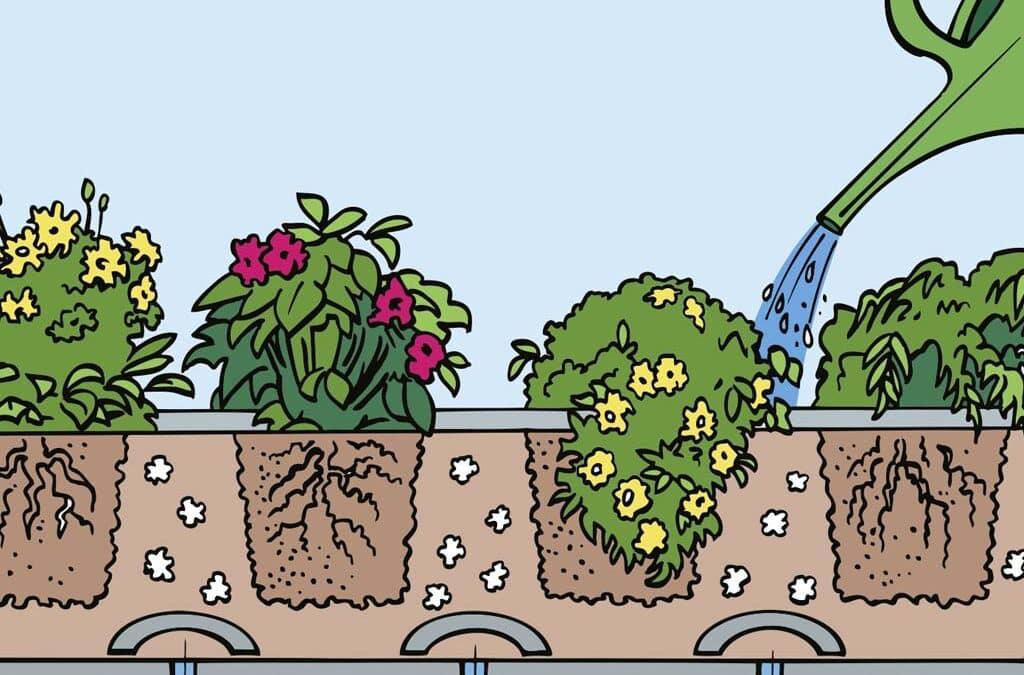 Einjährige Balkonpflanzen